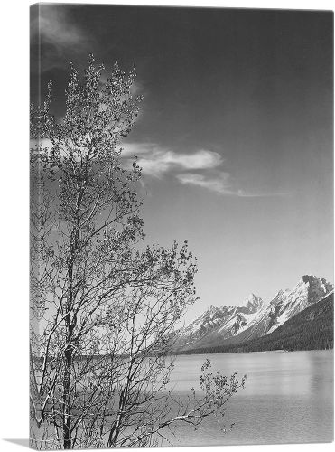 Grand Teton and Tree - National Park - Wyoming