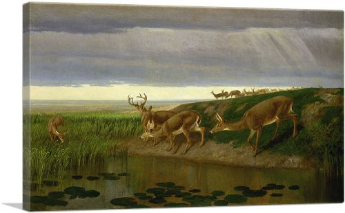 Deer on the Prairie