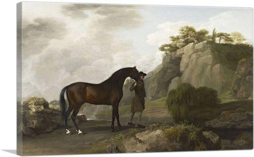 The Marquess of Rockingham's Arabian Stallion 1780