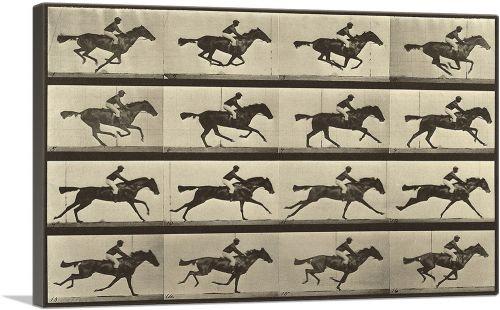 Animal Locomotion - Race Horse