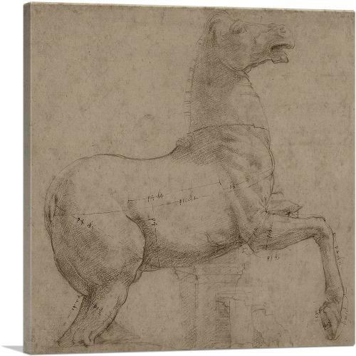 A Marble Horse on the Quirinal Hill 1513