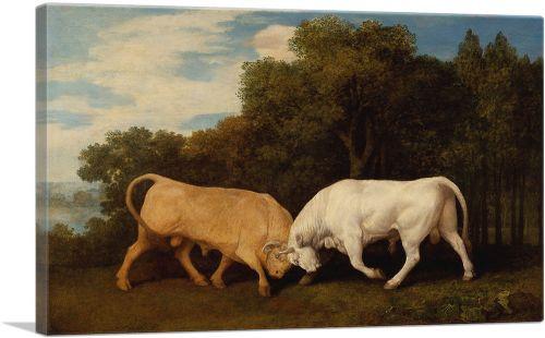 Bulls Fighting 1786