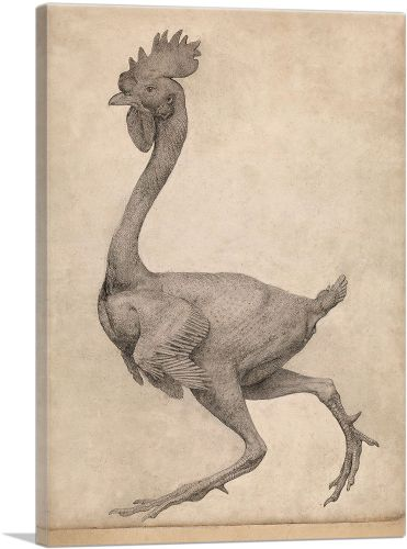Fowl - Lateral View with Most Feathers Removed 1806