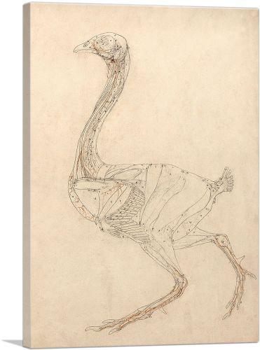 Fowl Body 1806