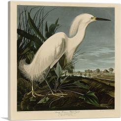 Snowy Heron - White_Egret