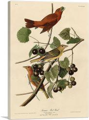 Summer Tanager - Summer Red Bird