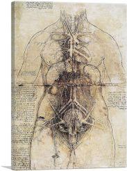 Anatomical Study 1510
