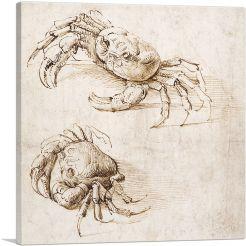 Studies of Crabs