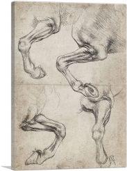 Studies of Horse's Leg
