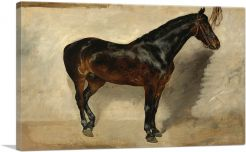 Study of a Brown-Black Horse