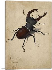 Stag Beetle 1505