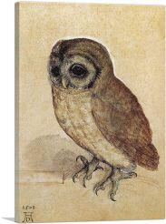 The Little Owl-1506