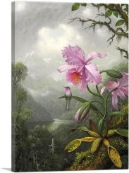 Hummingbird Perched on the Orchid Plant 1901