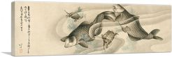 Picture of Koi Carp and Turtles 1813