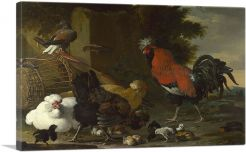 Yard with Rooster and Hens and Chicks 1670