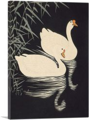 White Chinese Geese Swimming by Reeds