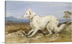 White Collie in a Landscape