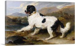Lion - A Newfoundland Dog 1824