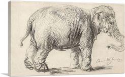 An Elephant 1637