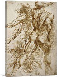 Anatomical Studies 1605