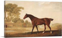 Eagle - A Bay Racehorse