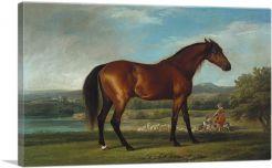 Hollyhock 1765