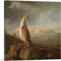 Kongouro 1772