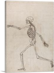 Study of the Human Figure - Lateral View