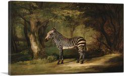 Zebra 1763