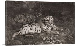 A Tiger and a Sleeping Leopard 1788