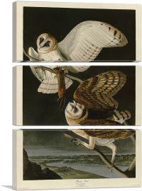 Barn Owl-3-Panels-90x60x1.5 Thick