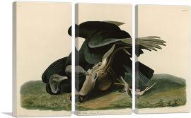 Black Vulture - Carrion Crow-3-Panels-90x60x1.5 Thick