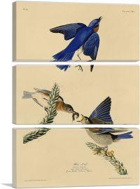 Blue Bird-3-Panels-90x60x1.5 Thick