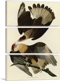 Brasilian Caracara Eagle-3-Panels-90x60x1.5 Thick