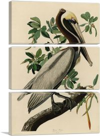 Brown Pelican-3-Panels-90x60x1.5 Thick