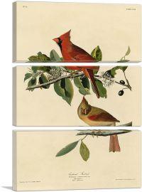 Cardinal Grosbeak-3-Panels-90x60x1.5 Thick