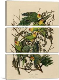 Carolina Parrot-3-Panels-90x60x1.5 Thick