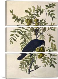 American Crow-3-Panels-90x60x1.5 Thick