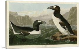 Great Auk - Pinguinus Impennis