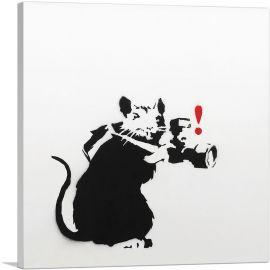 Paparazzi Rat