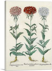 Florilegium IV