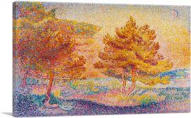 Les Pins 1899