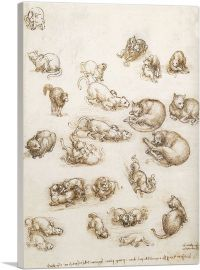 Lion and Cat Anatomical Study