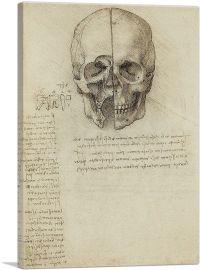 Studies of the Human Body - Skull