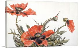 Red Poppies 1929