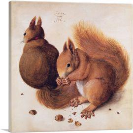 Squirrels 1512