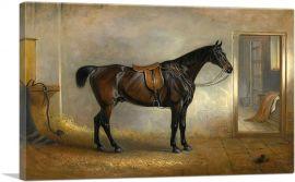 A saddled Dark Bay Hunter in a Loose Box 1848