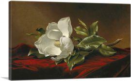 A Magnolia On Red Velvet 1885