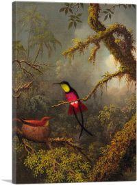 A Pair of Nesting Crimson Topaz Hummingbirds 1883