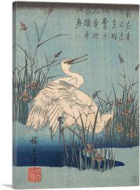 Egret in Iris and Grasses 1837